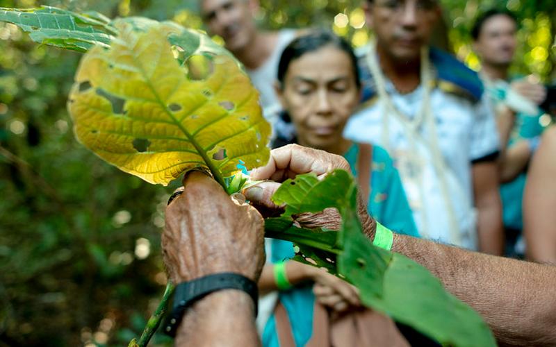 Exposição Frutos e Sementes – Espécies Florestais Nativas ameaçadas de extinção