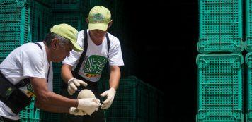 Mesa Brasil arrecada mais de 600 toneladas de alimentos em três meses